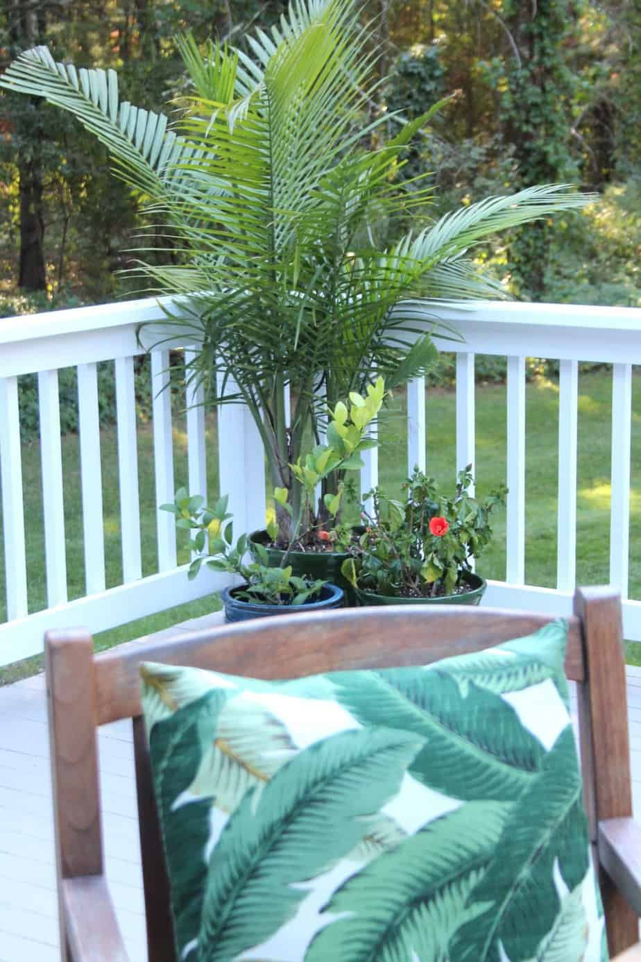 A potted palm tree on a deck.