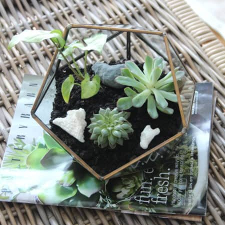 How To Put Together A Terrarium