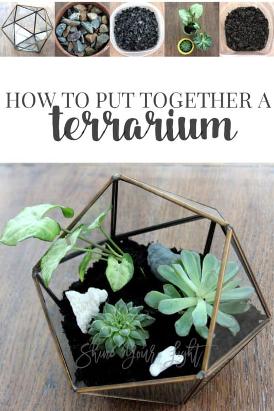 How to put together a terrarium with a few simple supplies.