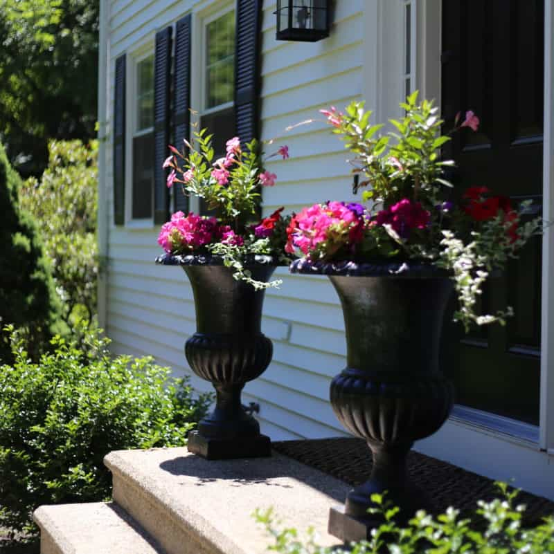 Summer urns with mandevilla and petunias