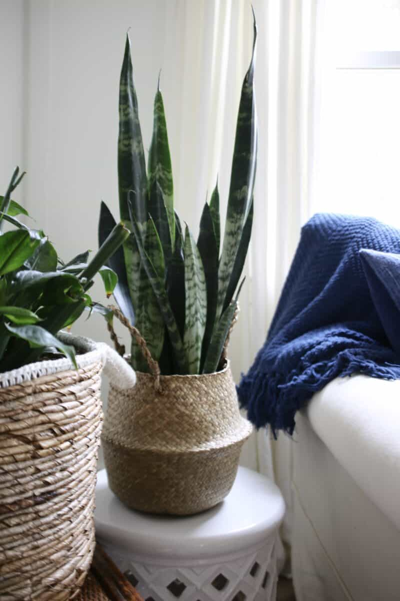 Add plants to a living room for a spring refresh